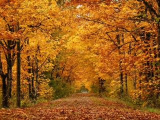 обои Дорога в осенней кленовой аллее фото