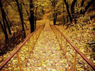обои Лестница в осенний лес фото
