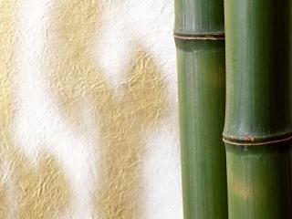 обои Бамбук на фоне стены фото