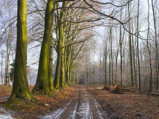 обои Вырубка леса у дороги фото
