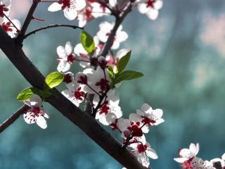 обои Веточка весеннего цветения фото
