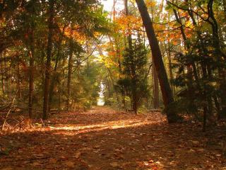 обои Лесная дорога осенним солнечным денём фото