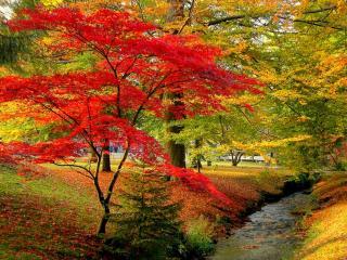 обои Осень в национальном парке фото