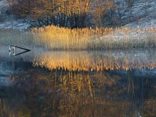 обои Отражение природы в холодном озере фото