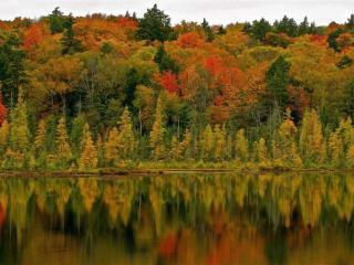 обои Лес осенний отражается в озере фото