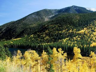 обои Красивая картинка осени в лесу фото