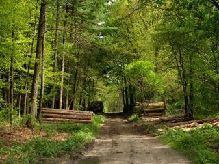 обои У дороги вырубка леса фото