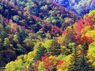 обои Осенние краски на горных склонах фото