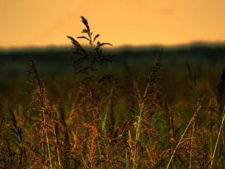 обои Луговая трава на закате фото