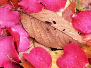обои Осенний дождь осыпал розы и деревья фото