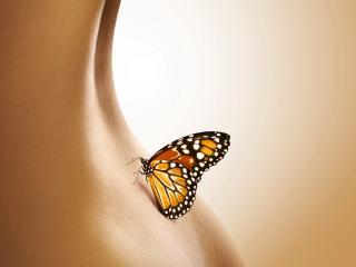 обои Бабочка села на женскую талию фото
