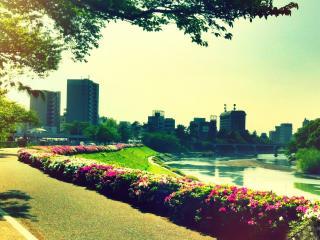 обои Вид цветущих кустов у дорожки возле речки фото