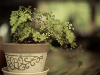 обои Зеленое растение в горшочке керамическом фото
