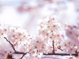 обои Веточка с цветочками весенними фото