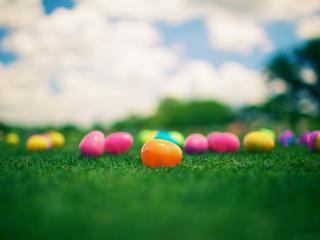 обои Разноцветные пластмасовые яички на газоне фото
