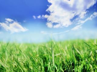 обои Ясное небо над зеленым полем фото