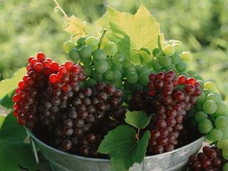 обои Красный и зелёный сочный,   сладкий виноград фото