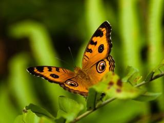 обои Желтая бабочка на веточке зеленой фото