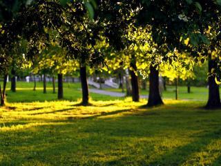 обои Свет и тень в красивом парке фото