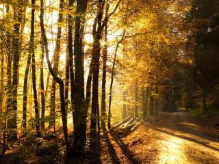 обои Осенняя дорога у просеки фото