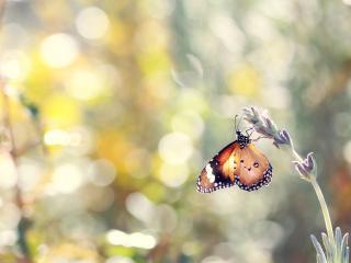 обои Бликовый фон и бабочка на цветке фото