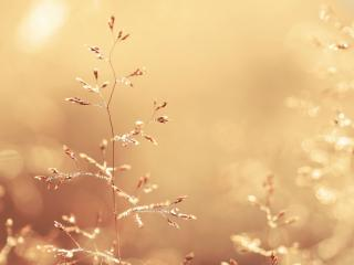 обои Утренняя роса на сухой веточке травы фото
