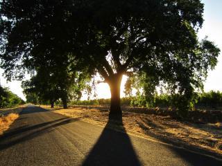 обои Асфальтированная дорога возле сада фото
