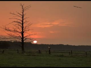 обои Сухое дерево,   закат и журавли фото