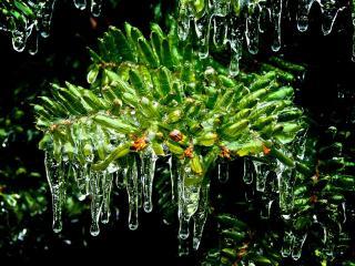 обои Сосульки на зеленом растении фото