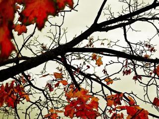 обои Ветка с опадающей яркой листвой фото