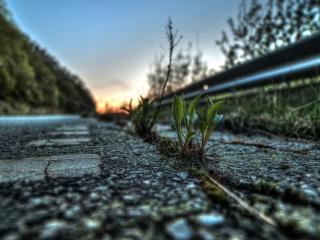 обои Растения на обочине дороги фото