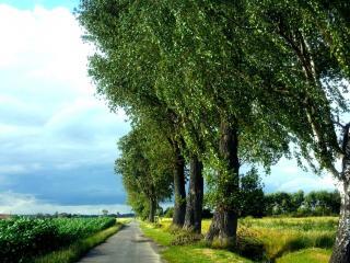 обои Июльская дорога в деревеньку фото