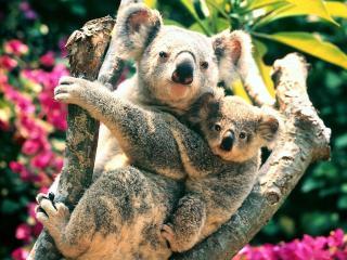 обои У мами на плечах фото