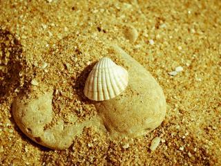 обои Уцелевшая ракушка на песке фото