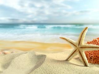 обои Губка и морская звезда на берегу моря фото