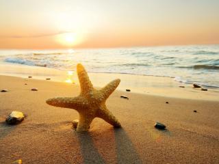 обои Желтая морская звезда на морском берегу фото