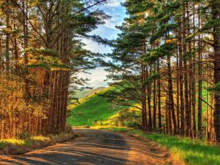 обои Поворот дороги и высокие деревья фото