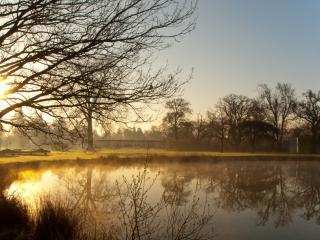 обои Утренний туман над весенним прудом фото