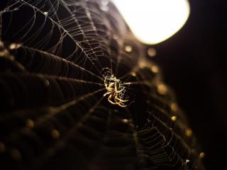 обои Паук и паутина в луче света фото