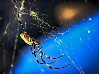 обои Паутина и паук в лунном свете фото