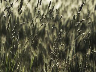 обои Травы на сером фоне фото