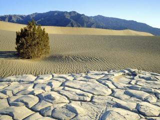 обои Высохшее болото и песок с кустарником фото