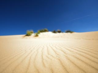 обои Песок и бедная растительность фото