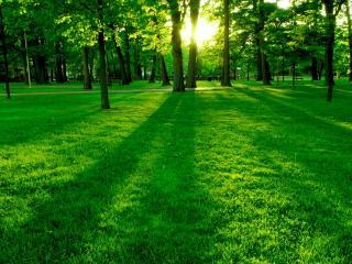 обои Яркие краски зеленого сквера фото
