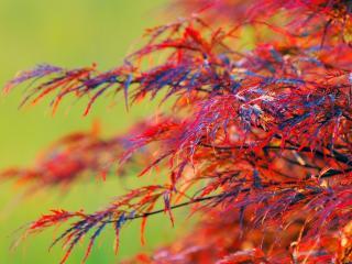 обои Красивые краски осенней листвы кустарника фото