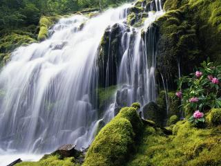обои Мох и цветущий куст у водопада фото