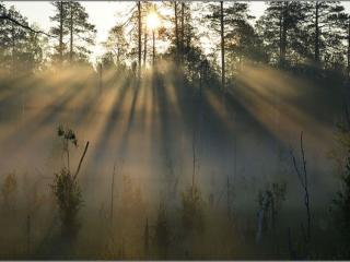 обои Утро в тумане фото