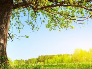 обои Весеннее дерево растущее обособленно фото