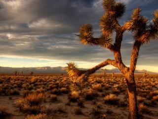 обои Колючее дерево в саванне фото