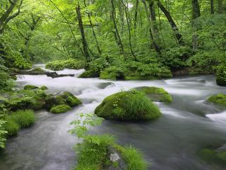 обои Быстрый ручей, среди зеленого весеннего леса фото